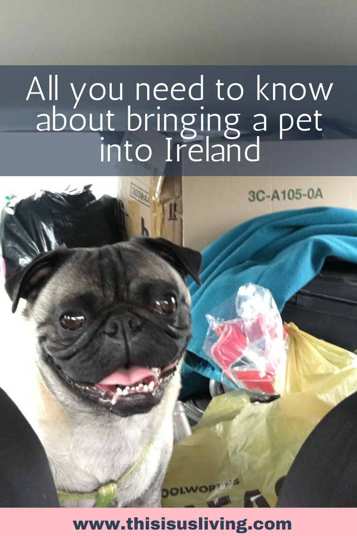 All you need to know about bringing a pet into Ireland