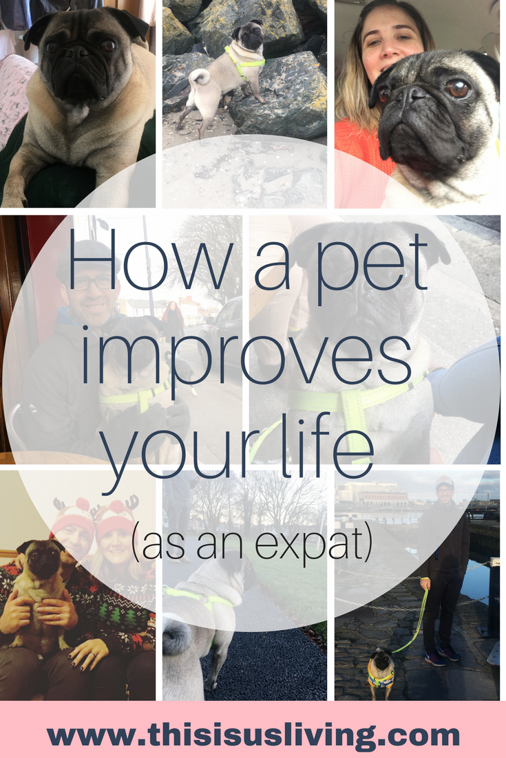 Moving countries is hard. It is genuinely the hardest thing we have ever done. But I think it would have been so much harder if we didn't have our beloved pet. Only since we have moved over have I realized how much a pet can improve your life as an expat. #livingabroad #expatlife #puglife