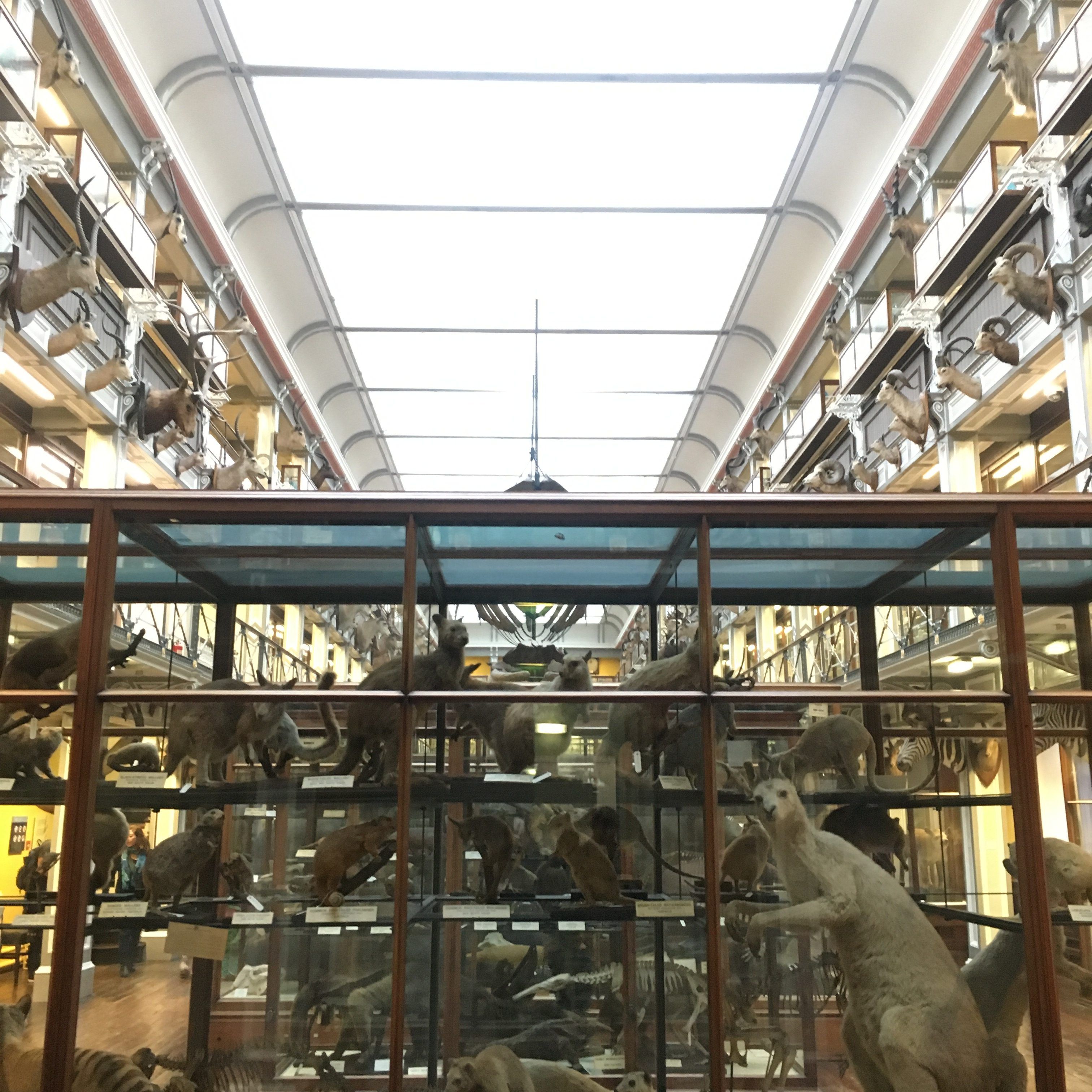 """Fans of the TV series """"Penny Dreadful"""" should visit the Natural History Museum in Dublin. This is the scene where Dr. Alexander Sweet (or Dracula as most of us know him to be) poses as a zoologist to seduce Vanessa Ives."""