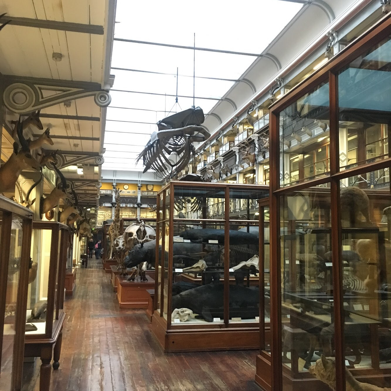 National History Museum, Dublin, Ireland. Also known as the dead zoo. Penny Dreadful was filmed here.